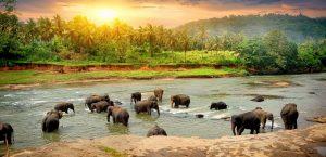 KERALA GOVERNMENT, ELEPHANT REHABILITATION CENTER, SREE KRISHNA TEMPLE IN GURUVAYUR, KOTTOOR KERALA, CAPTIVE ELEPHANTS, ANIMALS, WILDLIFE SOS, PINARAYI VIJAYAN, KOTTOOR VILLAGE, KERALA ECOTOURISM, KERALA